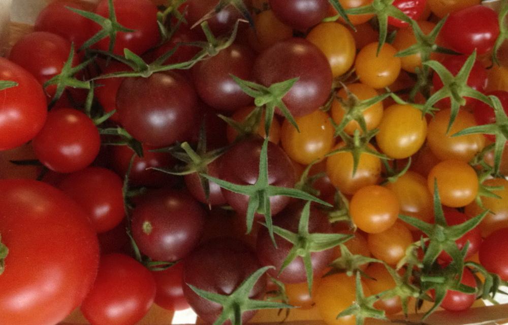 romantischeslandleben tomaten s en und selbst ziehen. Black Bedroom Furniture Sets. Home Design Ideas