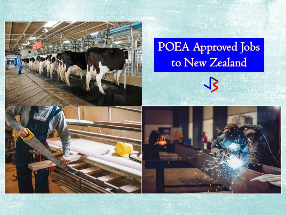 New Zealand is one of the many countries Filipinos want to work and live for! If you are searching for opportunities to work in the said country. This post may help you. Below is the compilation of job orders approved by the Philippine Overseas Employment Administration (POEA) to New Zealand! The country is looking for the following workers; dairy farm assistant, scaffolder, carpenter, truck driver, welder, farm workers, engineer, heavy equipment mechanic and many others! Below is the complete list of job orders to New Zealand you can apply for this last quarter of the year 2018.   Jbsolis.net is NOT a recruitment agency and does NOT process nor accept applications for jobs abroad.  All information in this article is taken from the website of POEA — www.poea.gov.ph for general purposes only. Interested applicant may double-check the job orders as well as the licensed of the hiring recruitment agencies in POEA website to erase the doubt and make sure everything is legal.