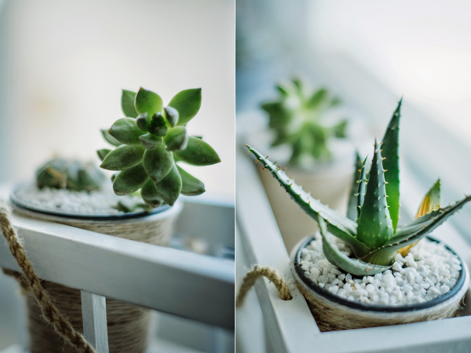 DIY pots and cups for succulent plants, diy lesson of home decor