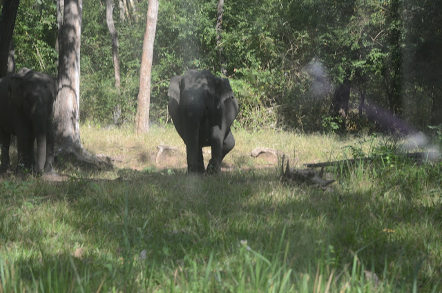 mock attack by elephant