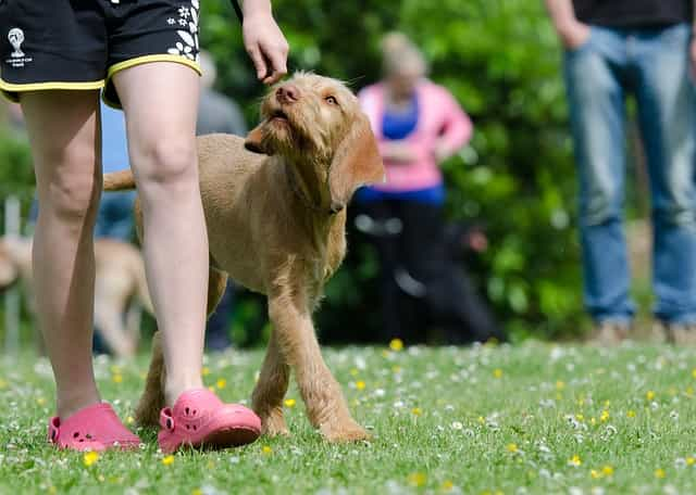 How Dogs Learn - Dog Training