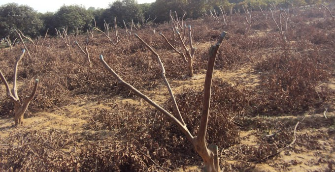 Pruning: Principles and Objectives