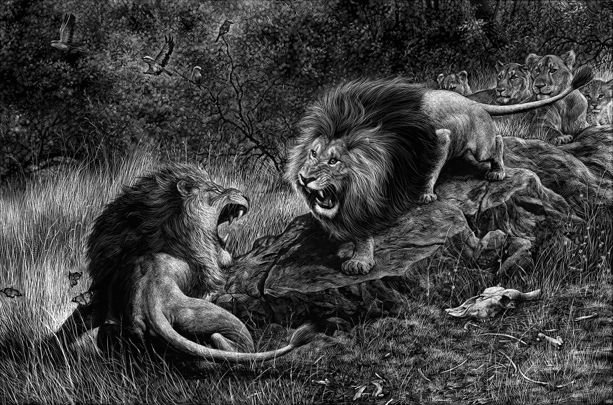 04-Lions-Ricardo-Martinez-Wild-Animals-inside-Scratchboard-Drawings-www-designstack-co