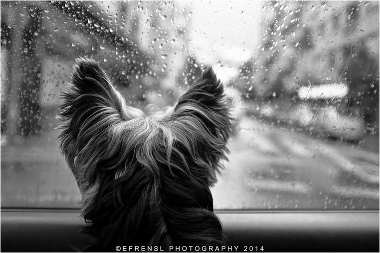 amateur photographers, Best Photo of the Day in Emphoka by Efren Sanchez, https://flic.kr/p/noDFqz