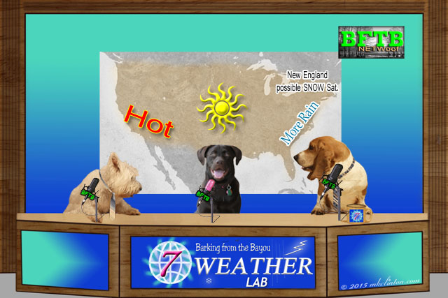 BFTB NETWoof Weather news desk with three dogs