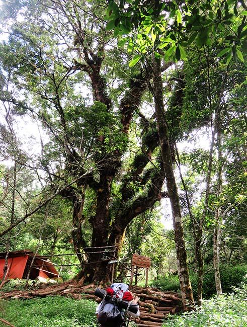 Pos 2 Gunung Sumbing via Banaran