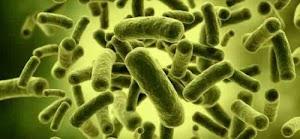 Bakteri yang Menguntungkan dan Merugikan