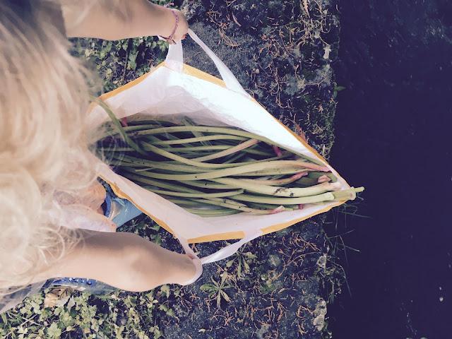 sac plein de rhubarbe prêt à embarquer sur un bateau