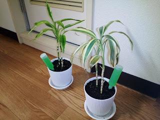 観葉植物の写真4