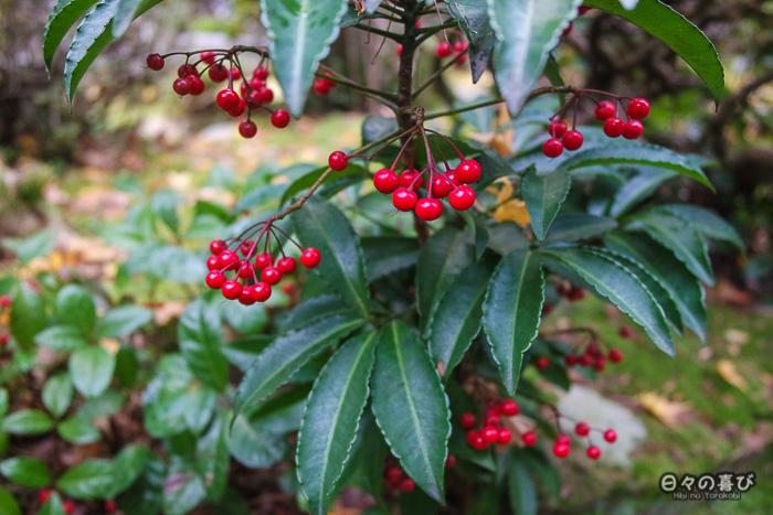 plantes ornementales dans le jardin du Rensei-ji