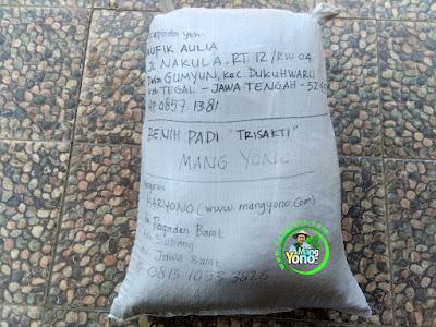 Benih pesana    TAUFIK AF. Tegal, Jateng   (Sesudah Packing)
