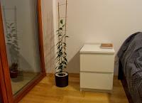 aranżacja wnętrz rośliny