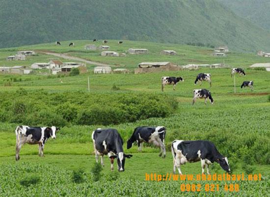 Mua Đất làm trang trại Ba Vì giá chỉ 50 triệu/ sào: lựa chọn đầu tư thông minh