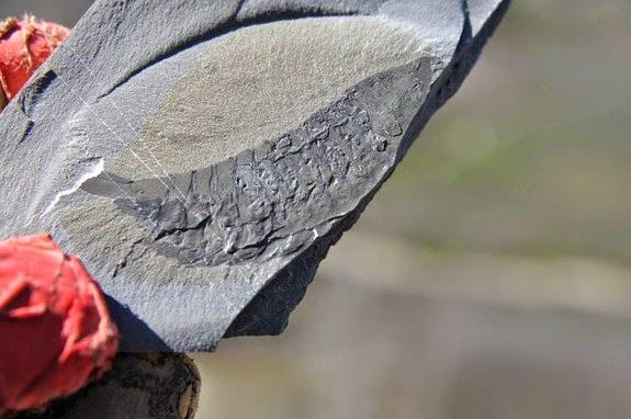 Ανακάλυψη! Χιλιάδες Απολιθώματα Τεράστιων Εντόμων (ΦΩΤΟ) Αόρατα Γεγονότα