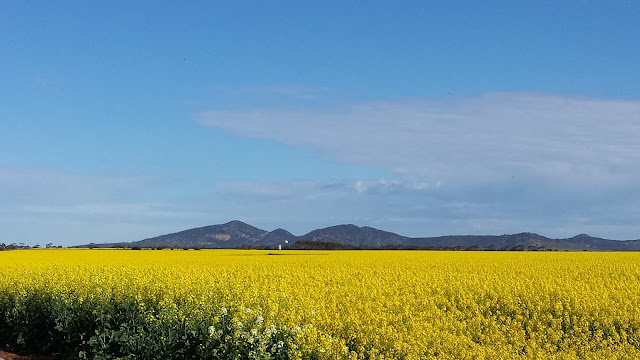 You Yangs Canola