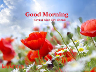 Good Morning Image With Beautiful Nature Archidev
