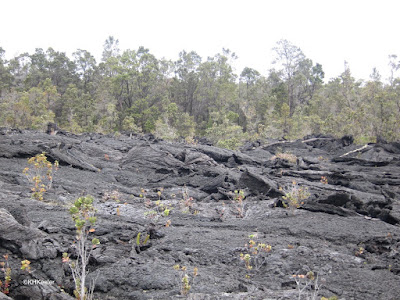 relatively new lava and forest the lava missed