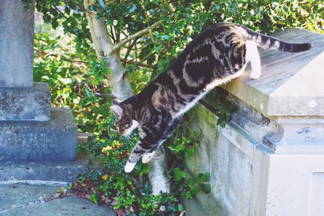 Arnos Vale Cemetery Cat