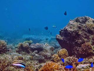terumbu karang teluk biru