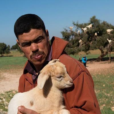 Pastor de cabras en Essaouira
