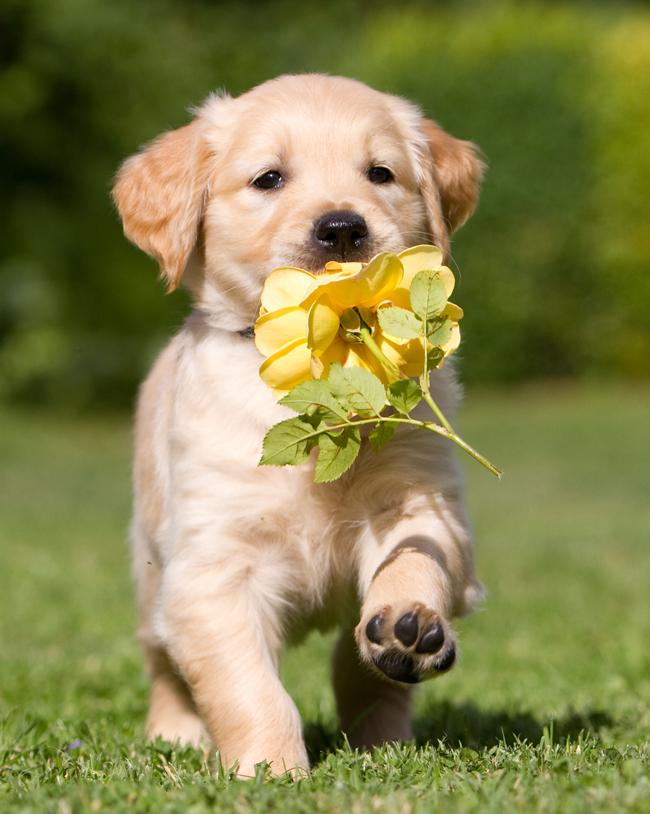 Rośliny trujące dla psa