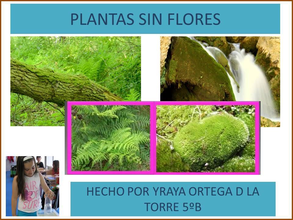 Cosas De Ninos Para La Escuela Plantas Sin Flores Yraya Ortega De