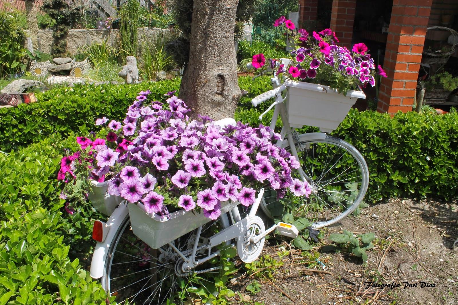 mi jardin y mi huerto bicicleta vieja en mi jardin
