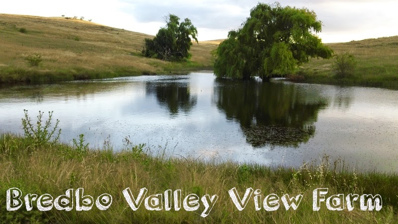 Bredbo Valley View Farm