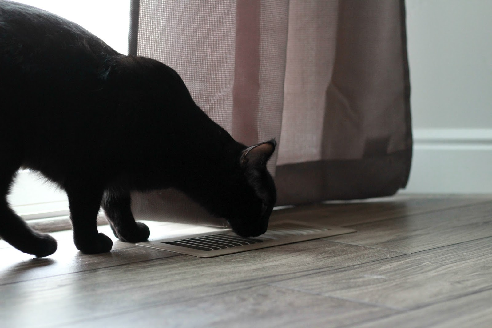 diy cat deterrent spray