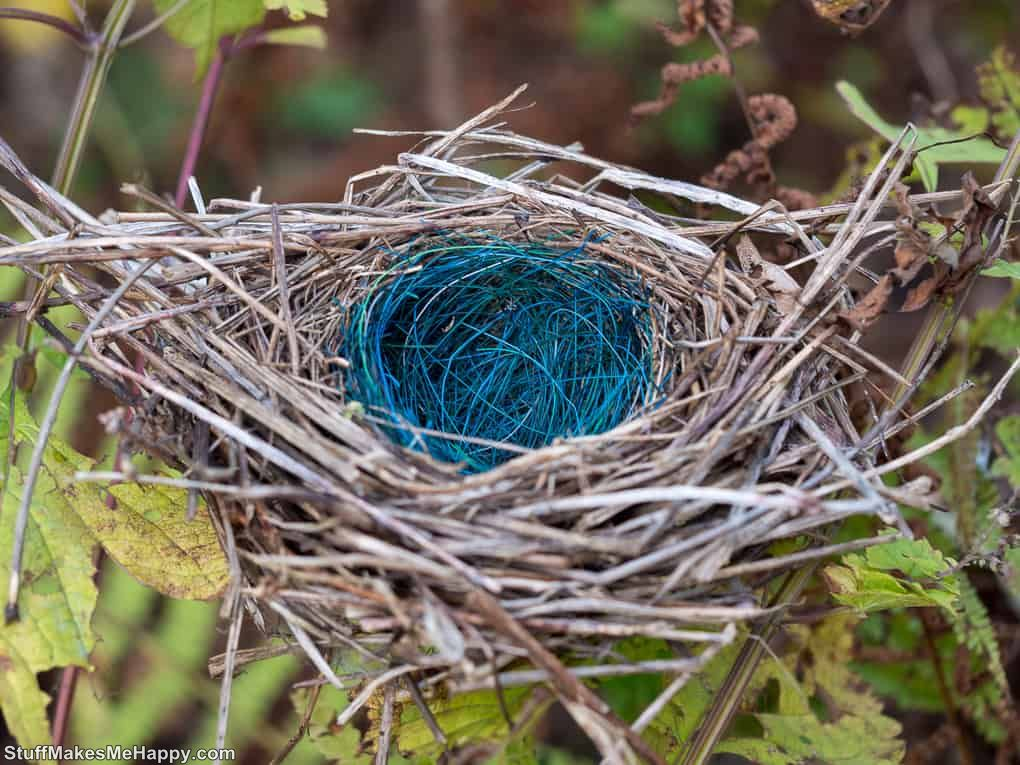 11. As birds decorate their nests