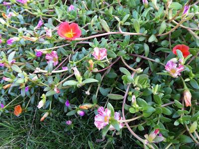 花博記念公園鶴見緑地 可愛い花