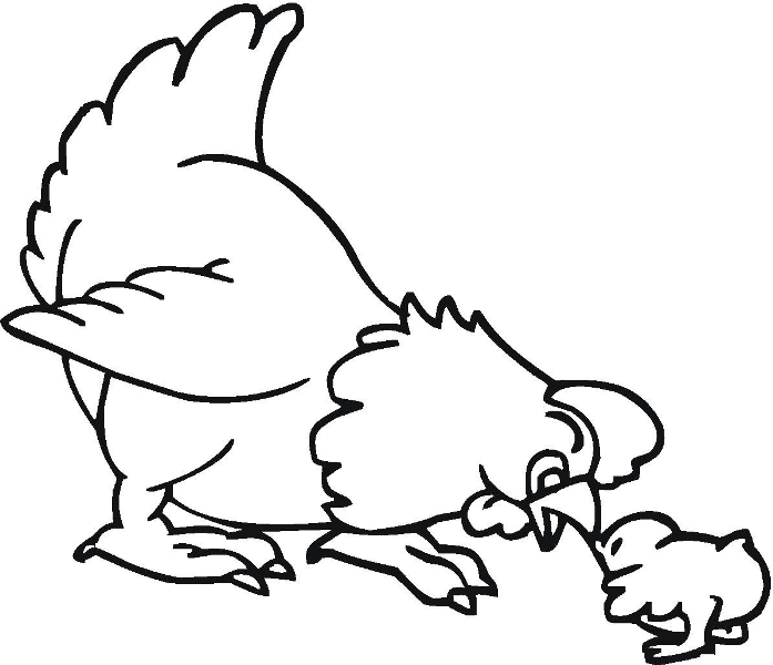 Belajar mewarnai gambar binatang ayam untuk anak