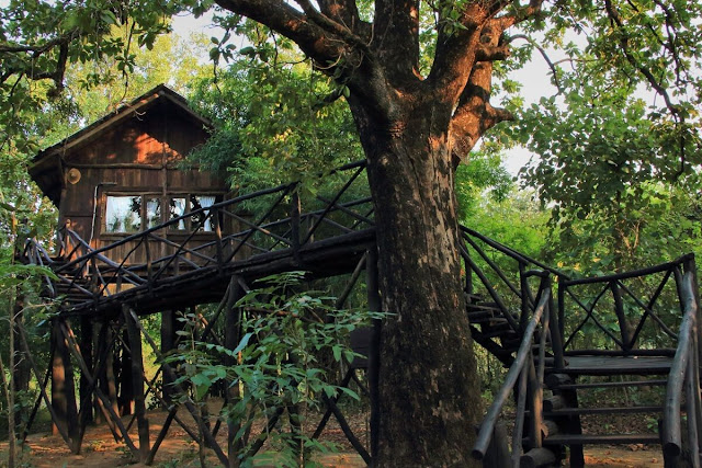 Tree House Bandhavgarh