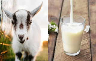 6 Reason You Might Decide To Switch To Goat's Milk