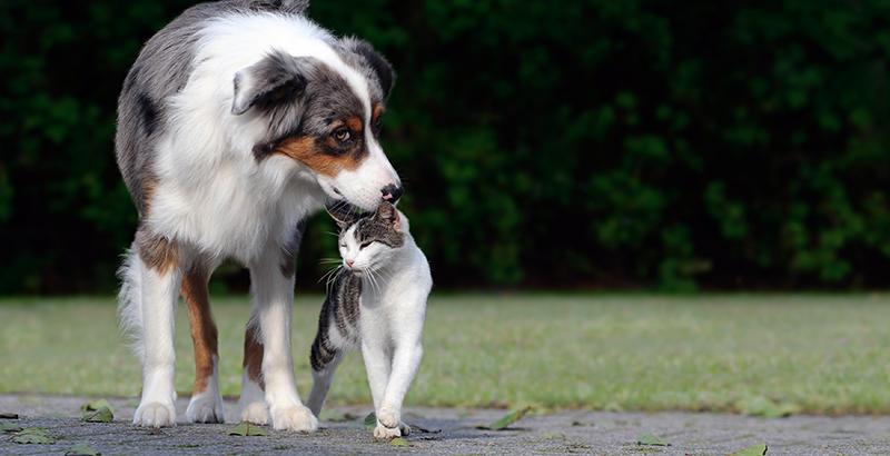 Savez-vous que votre chien est une proie facile pour les insectes ?