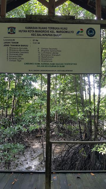 informasi tanaman hutan bakau (mangrove)