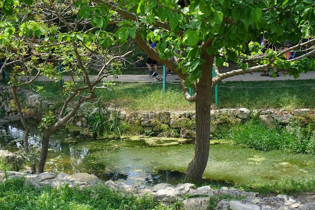 מים בגן לאומי עין חמד