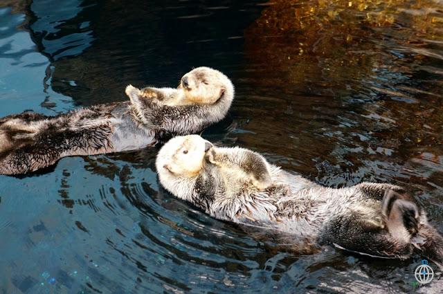 wydry lizbona