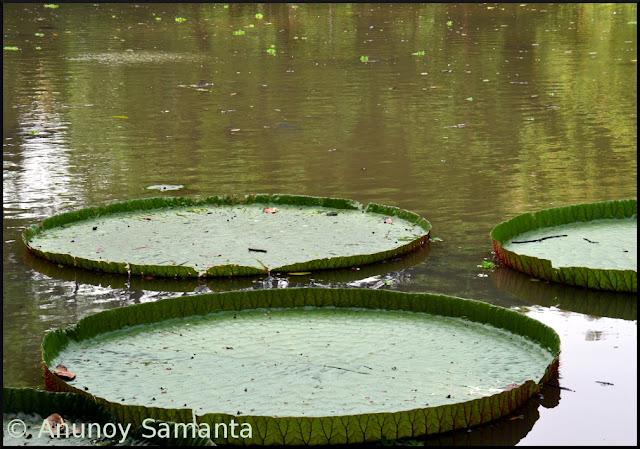 Acharya Jagadish Chandra Bose Indian Botanic Garden near Kolkata