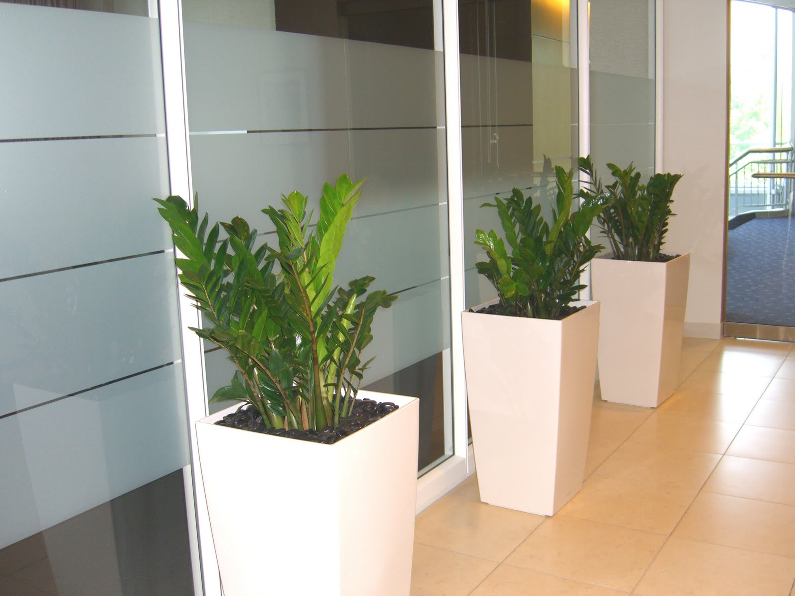 Plants Office Benefits