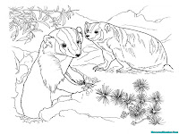 Download free printable badger kids coloring pages