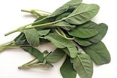 5 Tanaman Herbal yang Baik Bagi Kesehatan