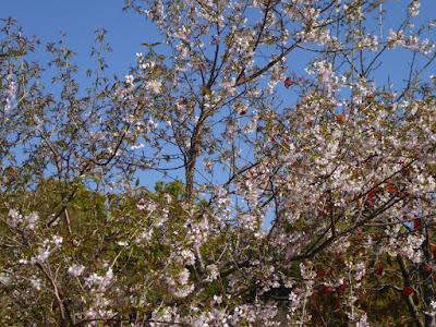 【大阪府枚方市】山田池公園・秋の紅葉ウォーキング さくら