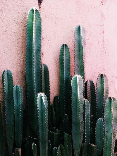 cactus inspiration du dimanche