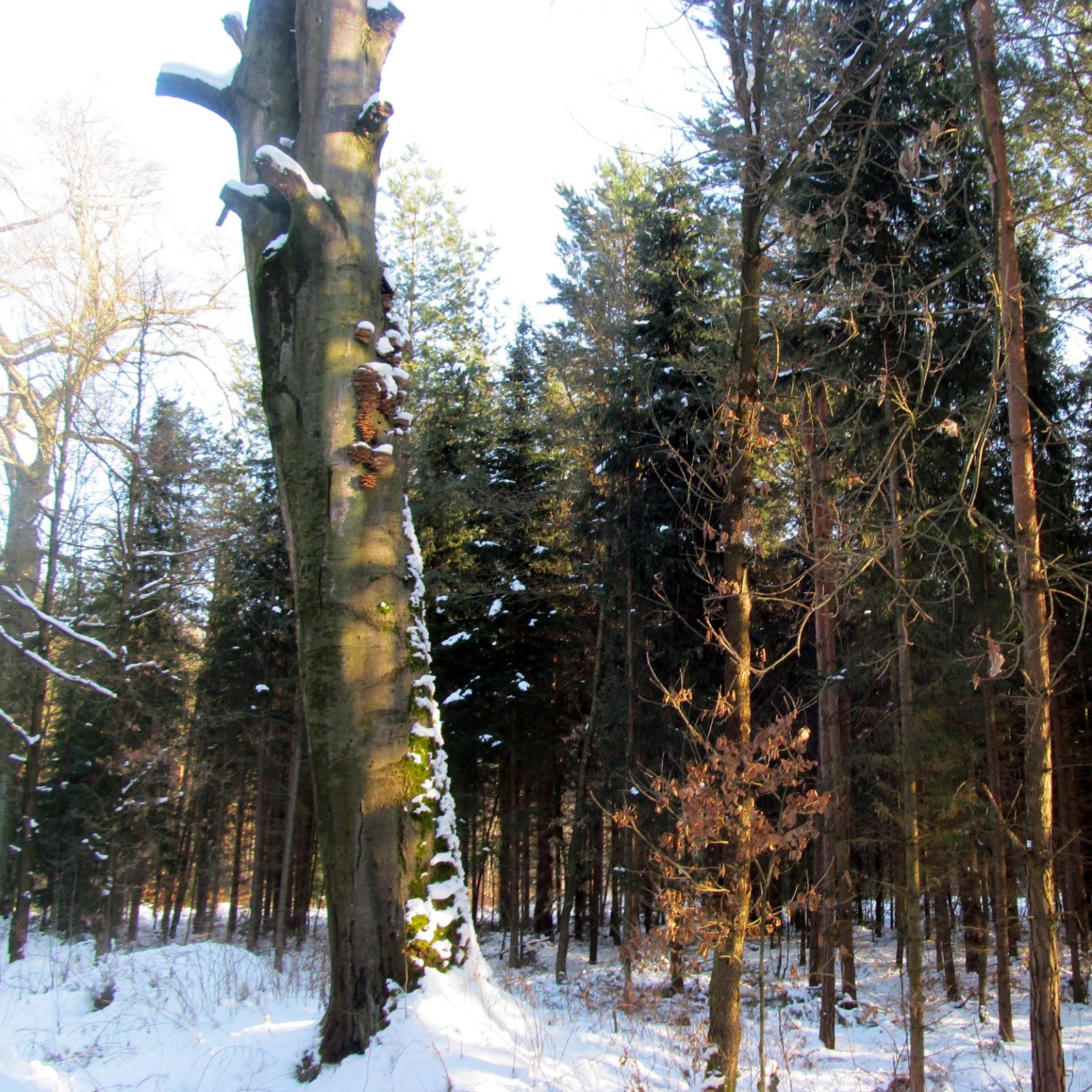 Draussen: Schneespaziergang
