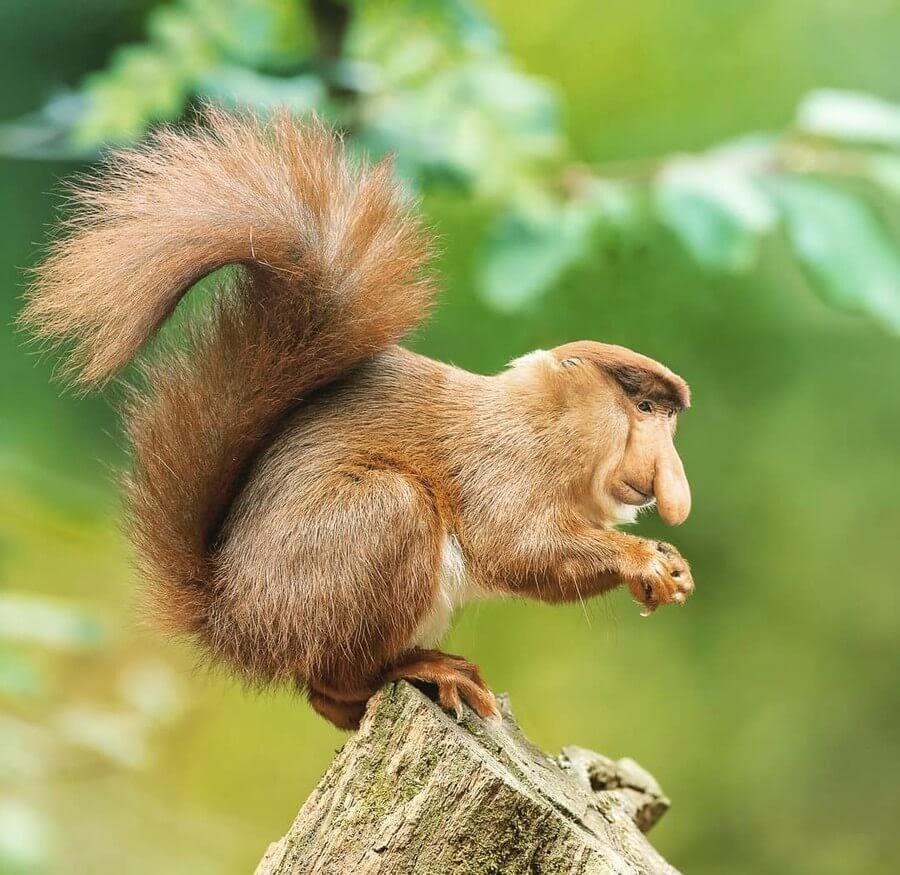 10-Squirrel-Monkey-AOG-Fredriksen-Animal-Art-www-designstack-co