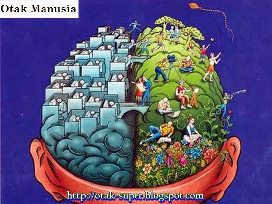 mitos otak manusia terbagi dominan otak kanan dan kiri