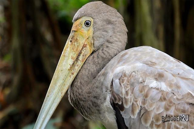 Harga tiket terkini Taman Burung kuala Lumpur
