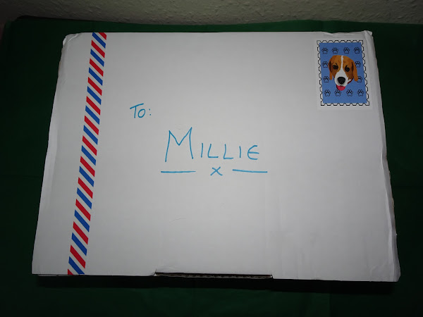 The best present for any dog Milo's mail.