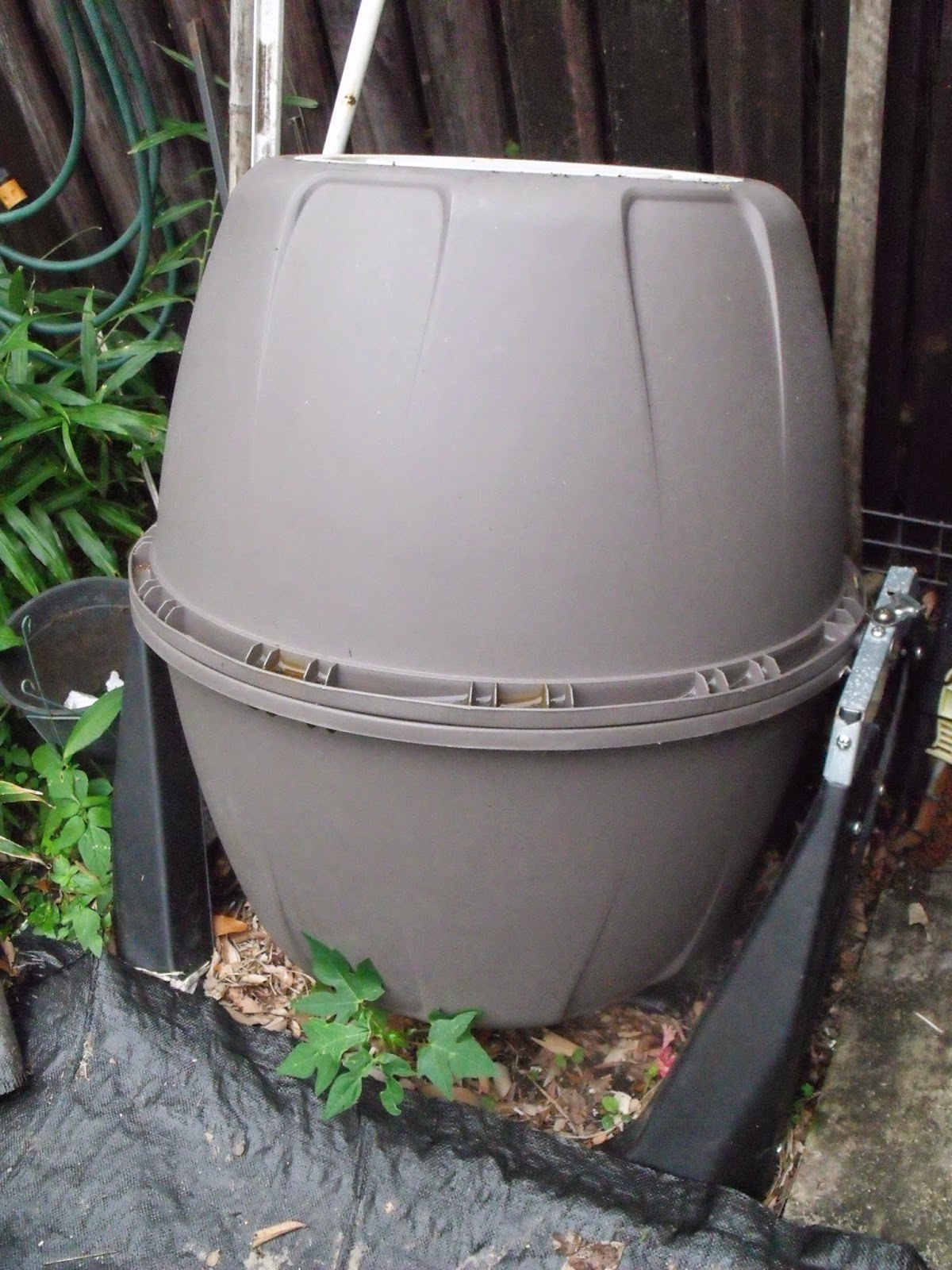 This Weekened When I Was Transferring Compost From The Tumbler Into Bin Noticed Something Have Never Seen Before Red Wrigglers They Must